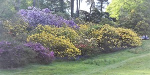 Azaleas and rhododendrons were in full bloom.