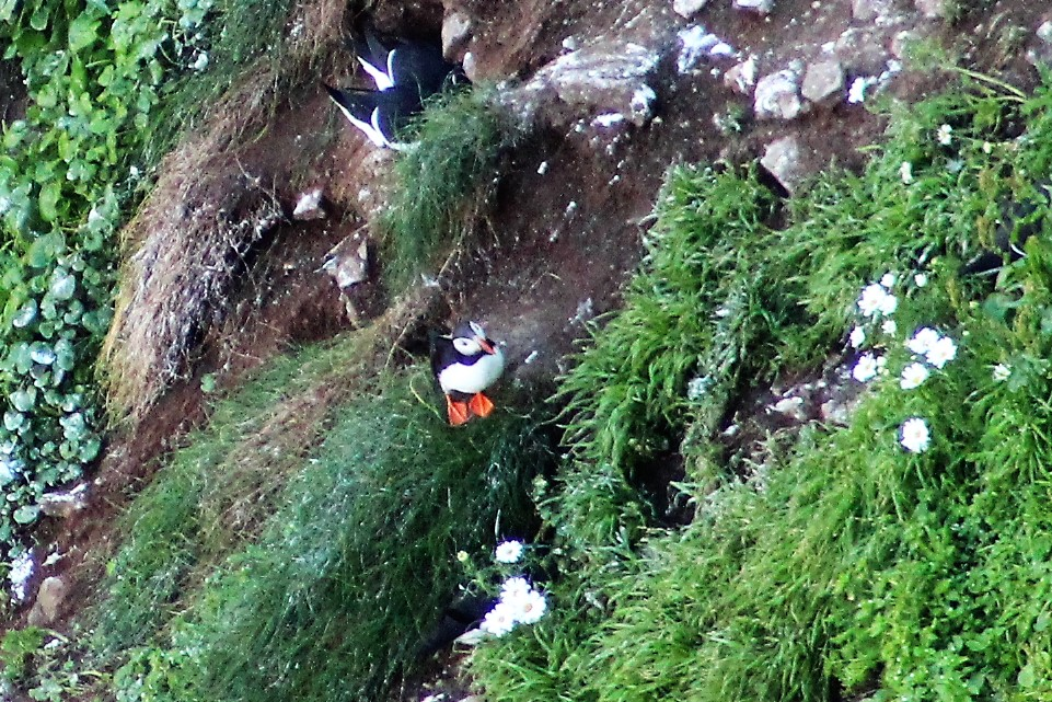 Puffins and Seals Highlight Trip to RathlinIsland