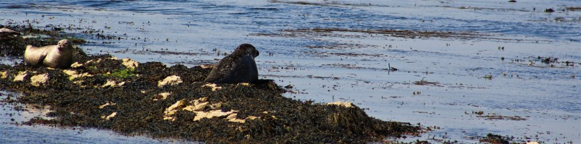 Seals enjoying the fine day.